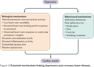 Depression and Coronary Heart Disease 2